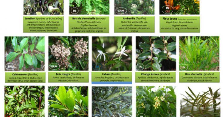 Plantes médicinales de La Réunion inscrites à la Pharmacopée Française